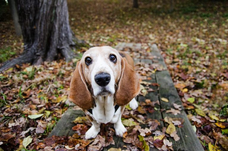 cute dog eyes with leaves