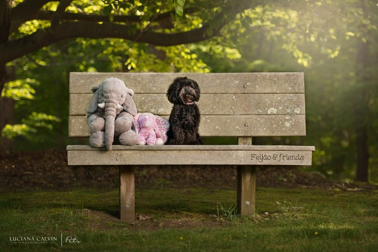 Chelmsford Pet Photographer