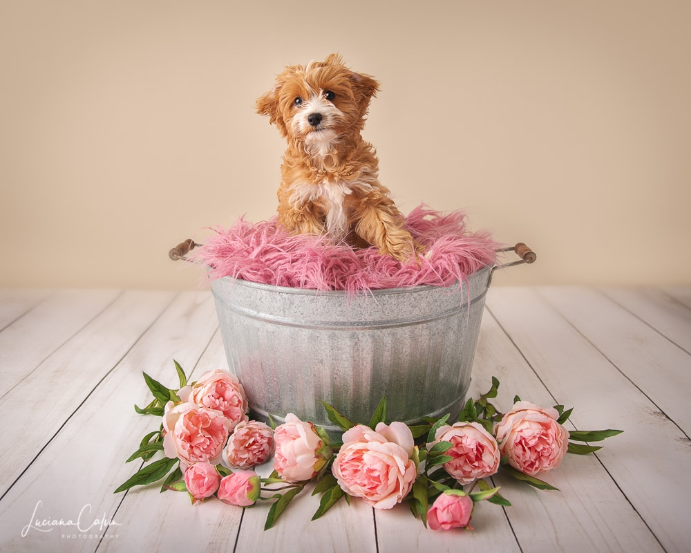 Little puppy on a bucket with flowers